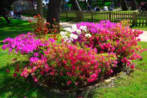 Massif de fleurs roses, rouges et blanches dans le parc Rosny