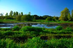 les barthes de Soorts, une zone humide avec une végétation luxuriante