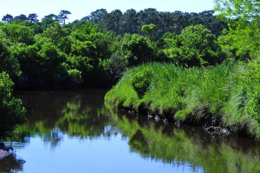 Vue des barthes avec le cours d'eau et la nature